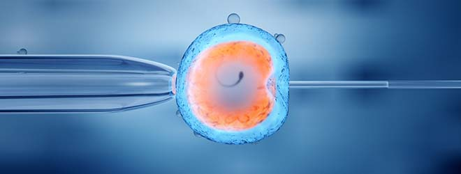 New Master's Degree in Assisted Human Reproduction